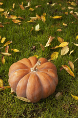 Orange pumpkin sitting on grass