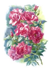Дикие розы, акварель.