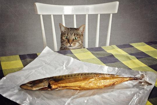 chat volant nourriture