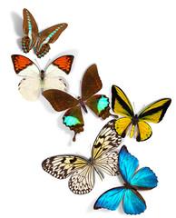 Wall Murals Butterflies group of butterflies