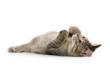 Cute tabby kitten on its back