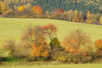 Trees with leaves in autumn colors on a meadow