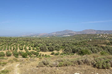 Landschaft mit Olivenbäumen im Süden auf Kreta