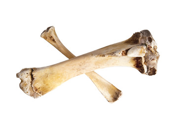 Bones on white background
