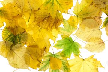 autumn background 5