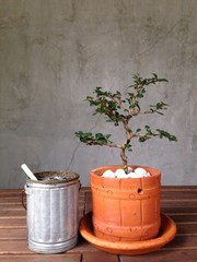 The bonsai in a pot on the wooden table with cigarette