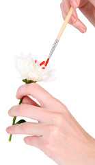 Female hands holding white flower and paint it with colors,