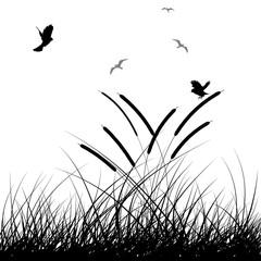 landscape grass background