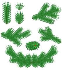Set fir branches
