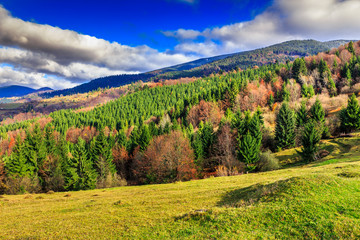 pine trees near valley in mountains and autumn forest on hillsid