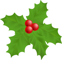 plant Holly