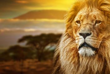 Fototapete - Lion portrait on savanna background and Mount Kilimanjaro