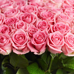 Pink natural roses