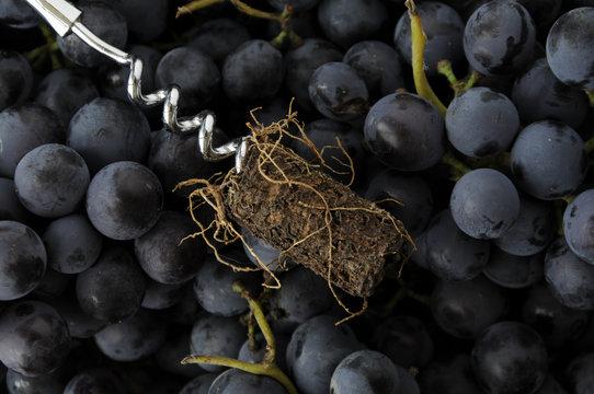 """"""" Le radici del vino """" """" The roots of wine """""""