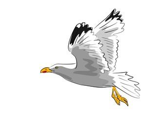 fliegende möwe