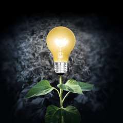 light bulb with plant as the filament