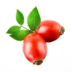 Rose hip isolated on a white background.