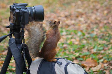 Squirrel and the camera