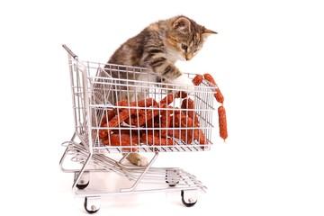 Hauskatze beim Einkaufen