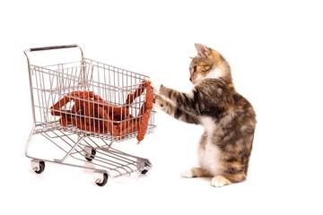Katzenbaby beim Einkaufen