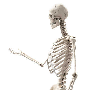 skeleton holding something