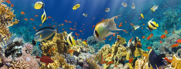 Photos illustrations et vid os de cat gorie faune - Poisson shark aquarium ...