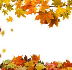 Wall Mural - autumn leaves
