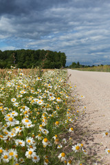 Wild flowers and rural road.