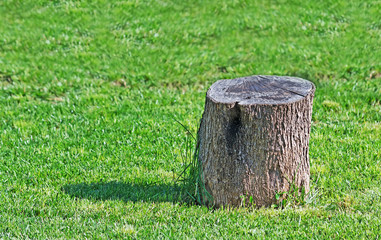 stump in the grass