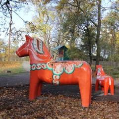 Cheval de Dalécarlie, cheval, Suède