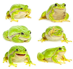 Fototapete - tree frog collection