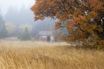 Old shed in fog.