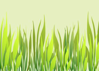 green grass photo frame