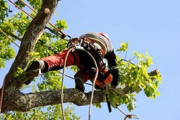 arboriculteur 12