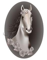 Horse's head. Illustration.