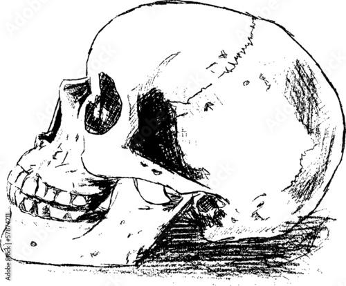 Schädel Anatomie\