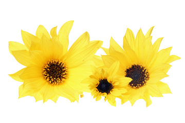 gelbe Blumen isoliert