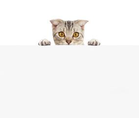 Pretty cat with blank board