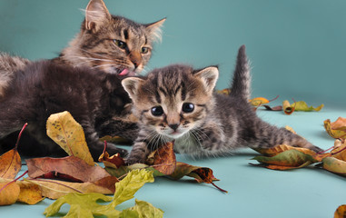 group of cats in autumn leaves with mother