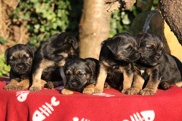 Group of adorable puppies on red blanket