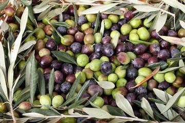 Fototapete - Cesto di olive nere e verdi