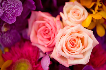 Beautiful Roses as a background
