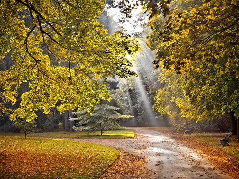 Path in the autumn park. Autumn Landscape.