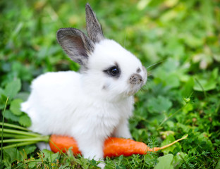 Funny baby white rabbit with a carrot in grass