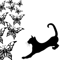 Black cat with butterflies on a white