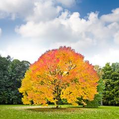 Fototapete - Beautiful autumn trees.