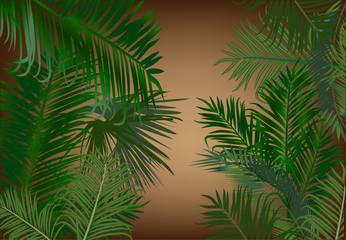 palm foliage on dark beackground