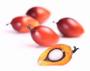 Oil palm fruit