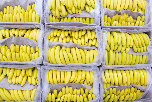 Ripe bananas in a box at the store.