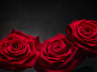 rose auf metall